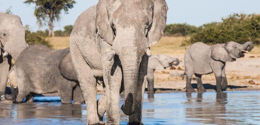 Partir en safari au Botswana
